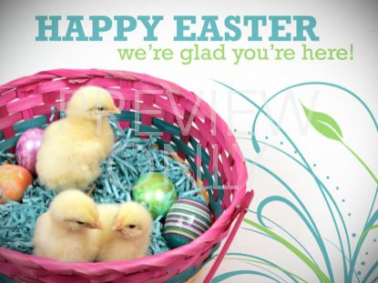 HAPPY EASTER BABY CHICKS