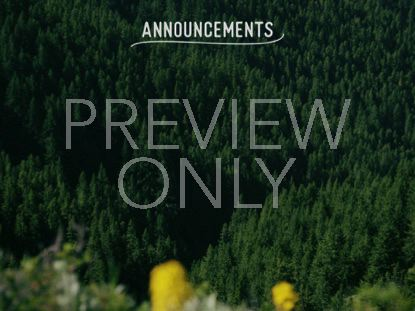 MOUNTAIN PINES ANNOUNCEMENTS