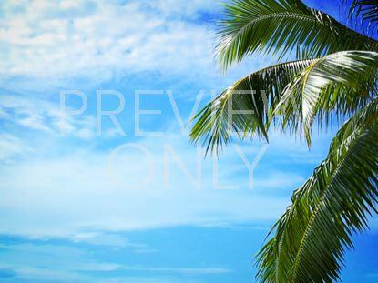 PALM TREE BLUE SKY CLOUDS