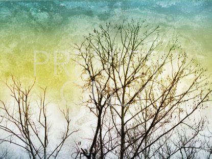 TREELINE STILL