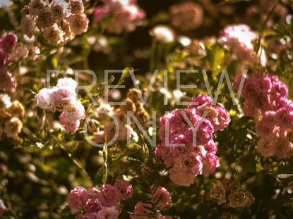 VINTAGE FLOWER STILL 1